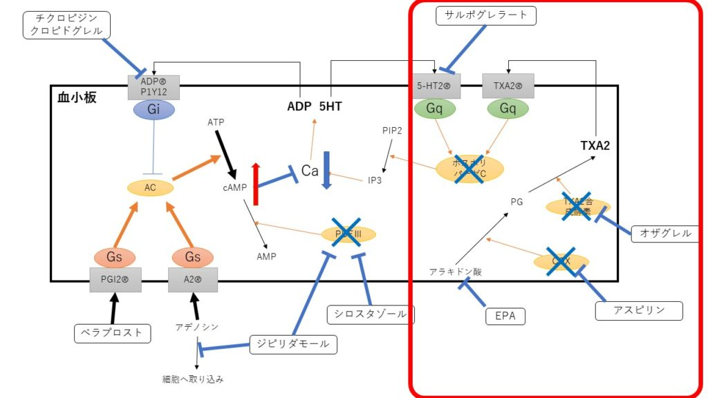 Gqタンパクを介して血小板凝集抑制
